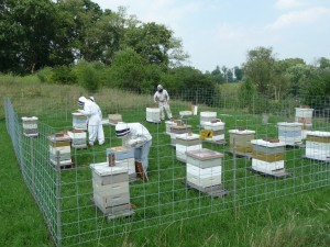 Dr. Ostiguy's crew at the Hilltop apiary