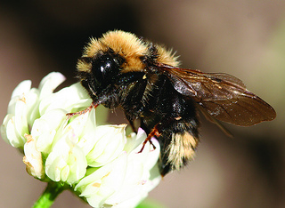 honeybee decline caused by neonicotinoids