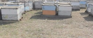 Old Mill Honey Company hives
