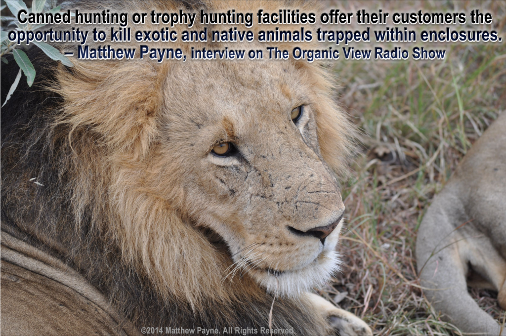 Canned hunting or trophy hunting facilities offer their customers the opportunity to kill exotic and native animals trapped within enclosures.