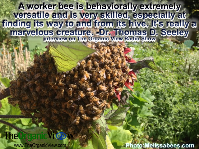 A worker bee is behaviorally extremely versatile and is very skilled, especially at finding its way to and from its hive. It's really a marvelous creature. -Dr Thomas D Seeley