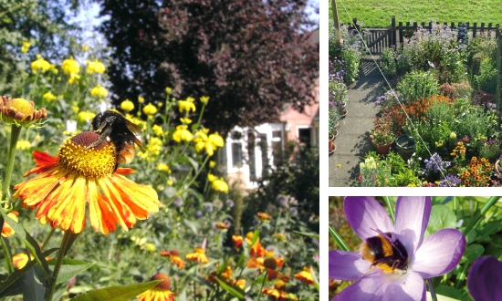 "How ""Bee kind"" is your garden?"