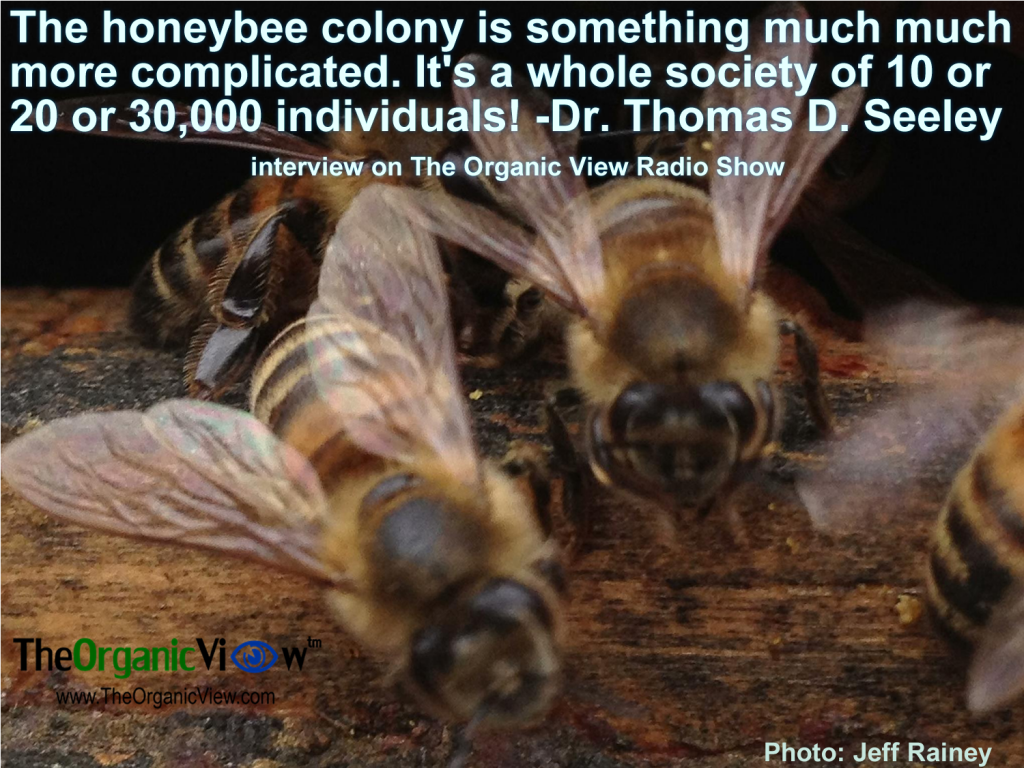 The honeybee colony is something much much more complicated. It's a whole society of 10 or 20 or 30,000 individuals -Dr Thomas D Seeley