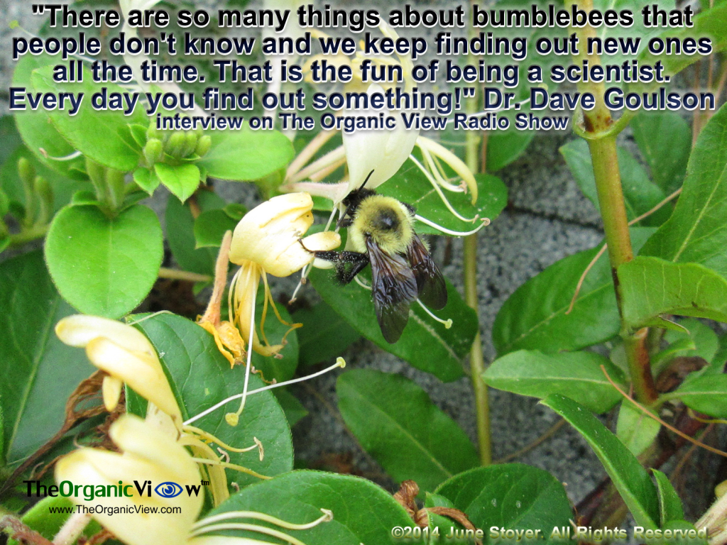 There are so many things about bumblebees that people don't know and we keep finding out new ones all the time. That is the fun of being a scientist Dr Dave Goulson
