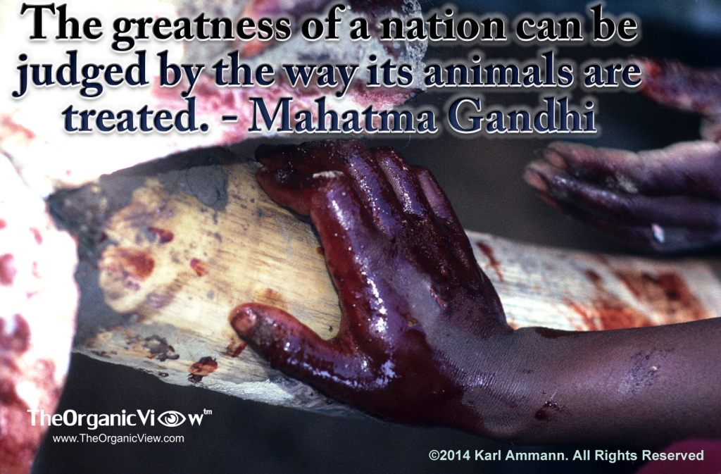The greatness of a nation can be judged by the way its animals are treated -Mahatma Gandhi