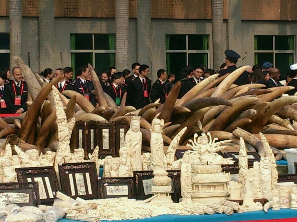 China Destroys Ivory for First Time. (Photo: Wildlife Conservation Society)