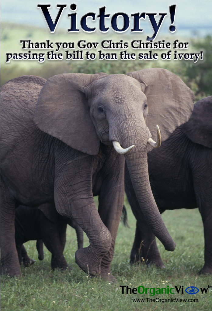 Thank you Gov Chris Christie for passing the bill to ban the sale of ivory!