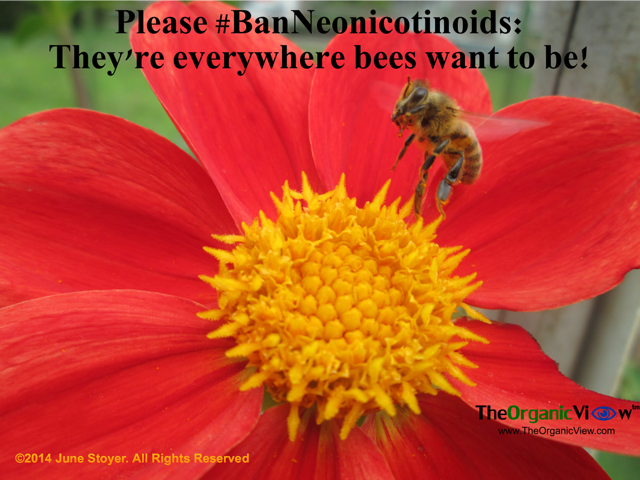 Please Ban Neonicotinoids Theyre everywhere bees want to be June Stoyer