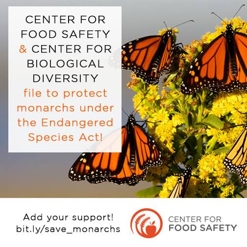 Please help the Center For Food Safety protect the monarch butterfly!
