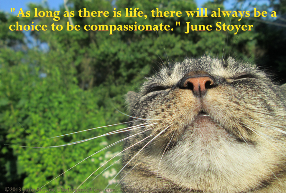 As long as there is life, there will always be a choice to be compassionate. June Stoyer