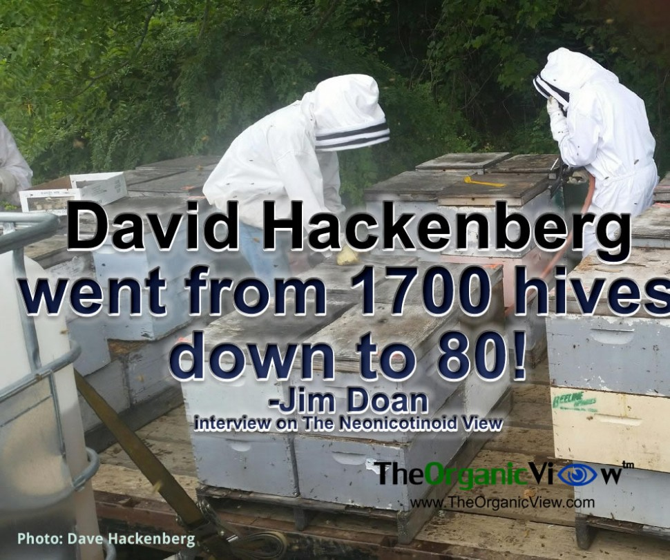 David Hackenberg's beekeeping business went from 1700 hives down to 80
