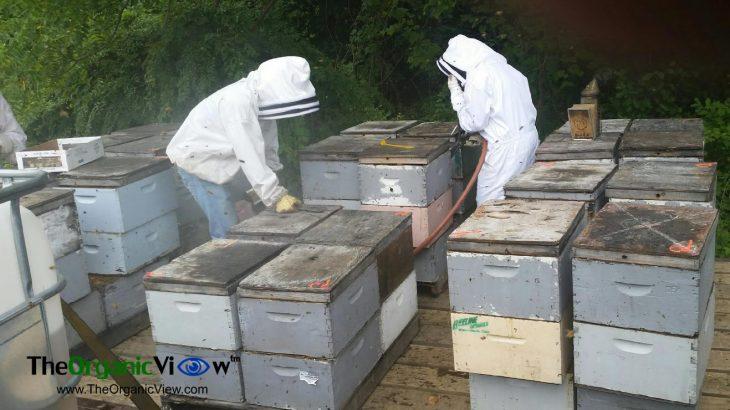 Are We Losing American Beekeepers?